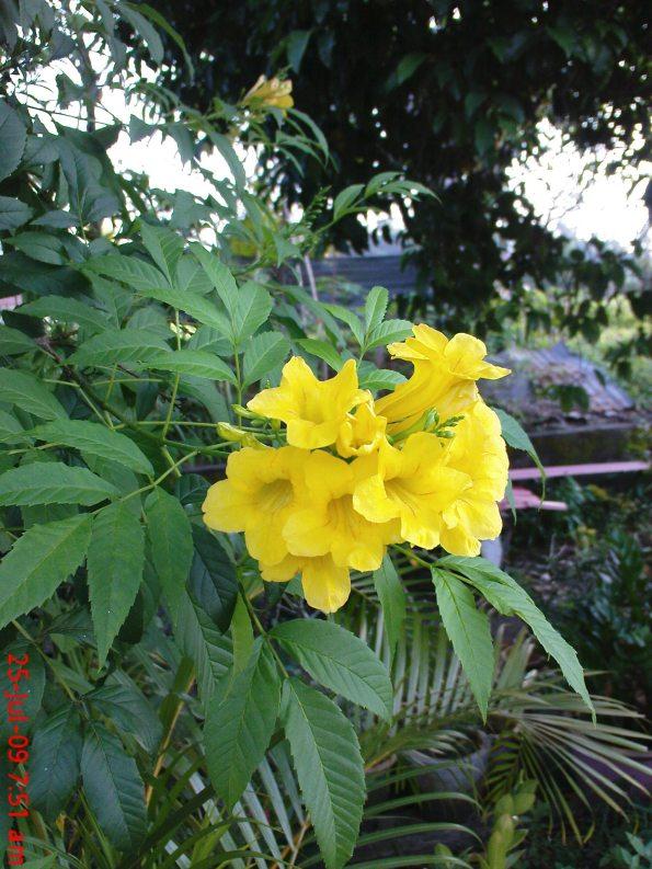77 Flower (2)