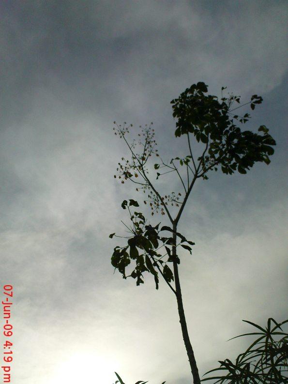 Satelite Like Plant