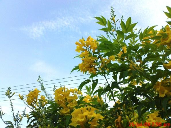 77 Flower